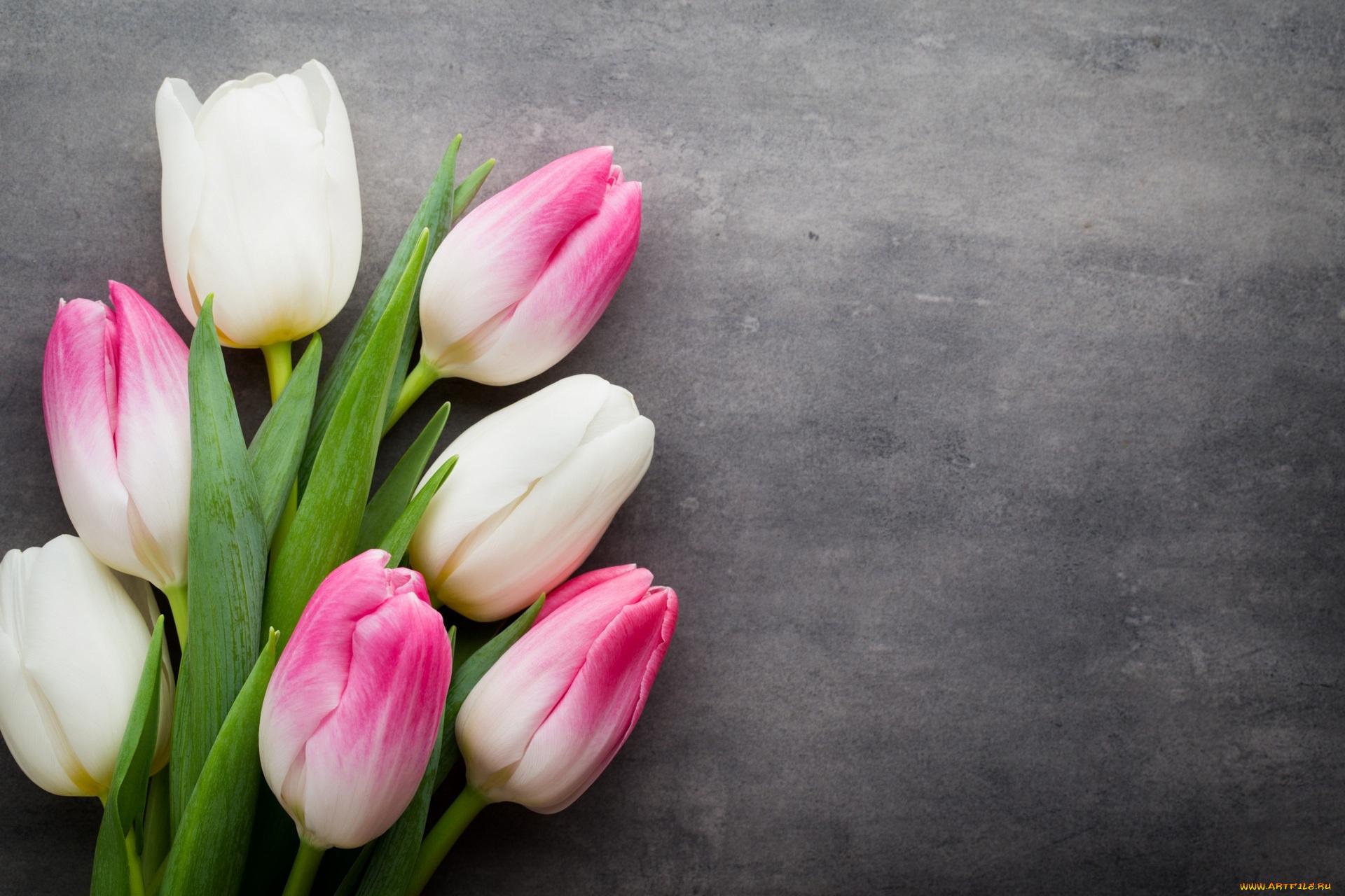 Открытка тюльпаны слева