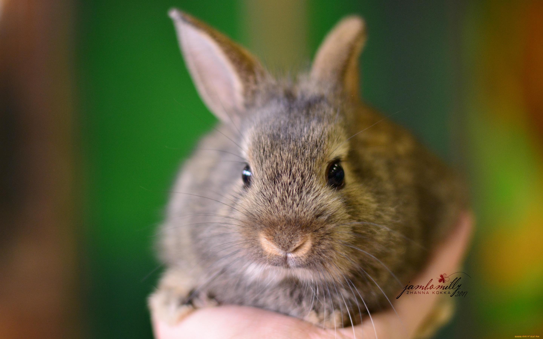Кролик макро  № 3207767  скачать