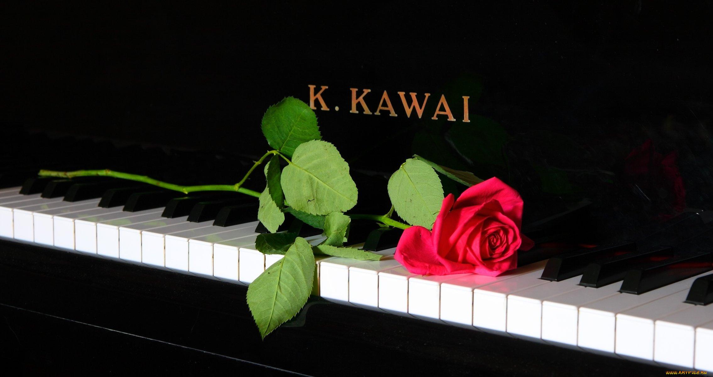 Музыкальный цветок картинки