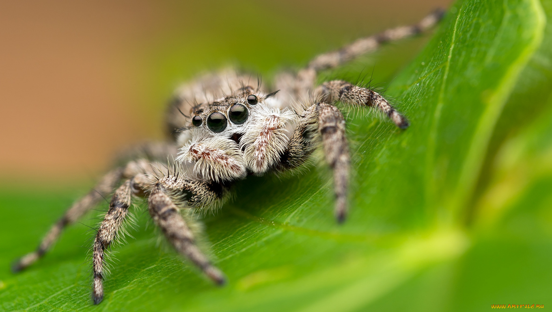 природа животные паук  № 2544190 бесплатно