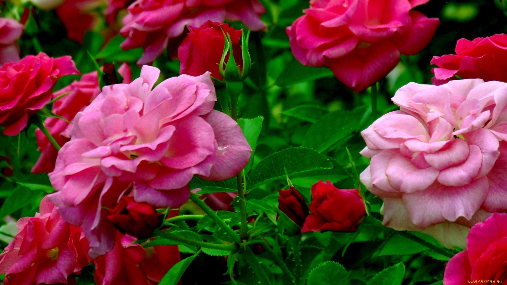 Открытки лучшему другу с цветами