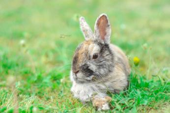 обоя животные, кролики,  зайцы, кролик, природа, трава, ушки, животное