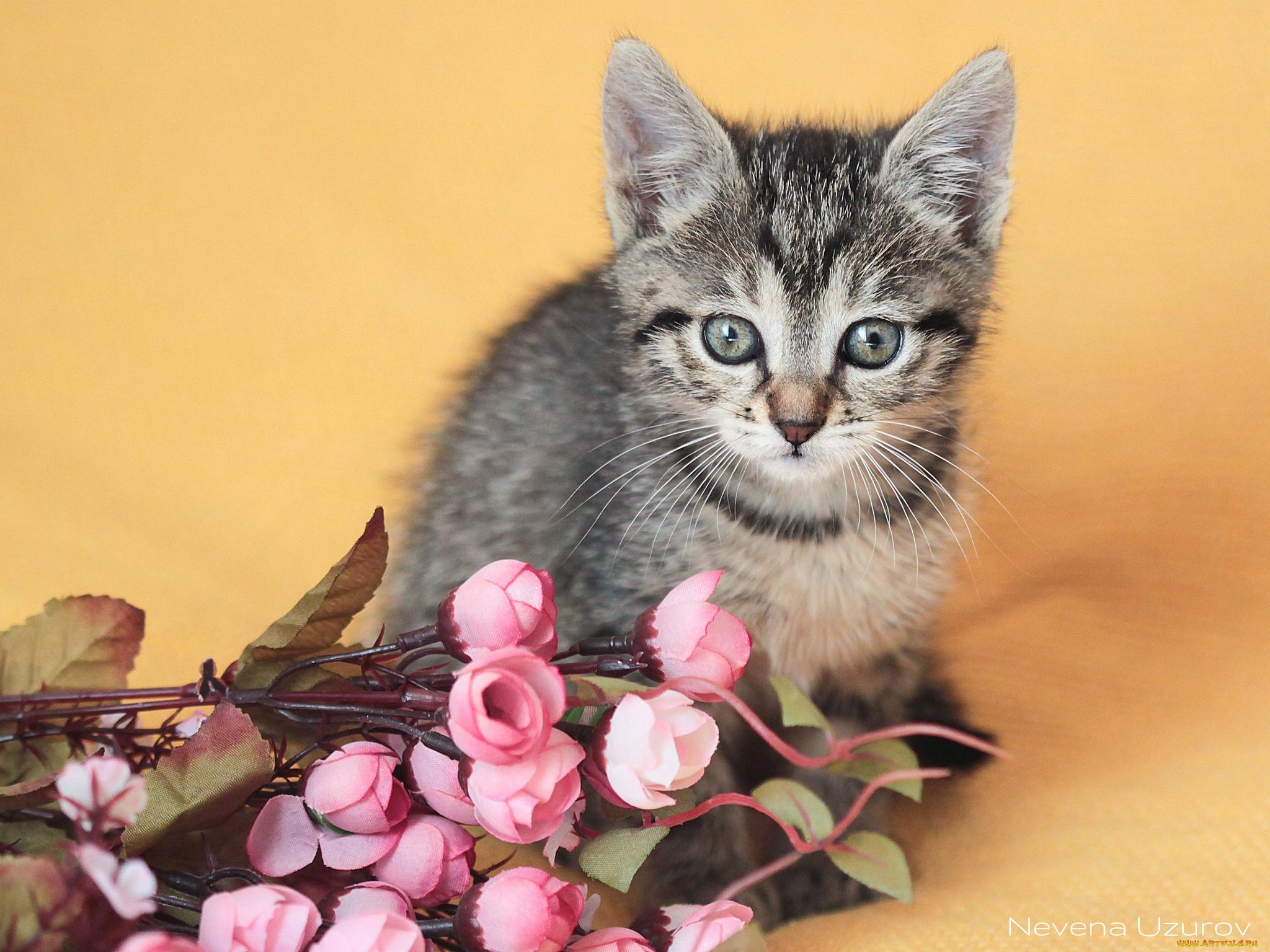 природа животные кот котенок серый журавлики nature animals cat kitten grey cranes  № 654736  скачать