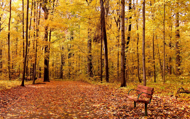 деревья парк осень роща  № 3186118 бесплатно