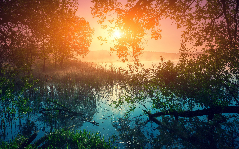 Туман над лесной речкой  № 636685 без смс