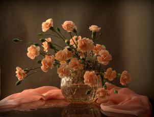 обоя цветы, гвоздики, шабо, натюрморт, фотонатюрморт, свет, и, тени, с, цветами
