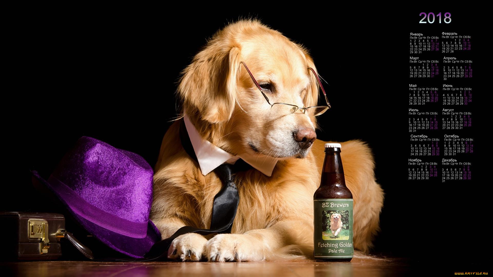 ретривер собака пиво бутылка очки смотреть