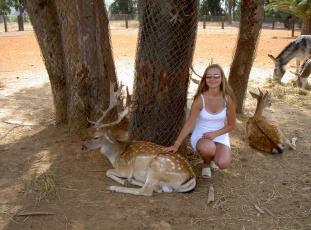 обоя ispanija, safari, животные, олени