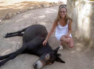 обоя ispanija, safari, животные, ослы
