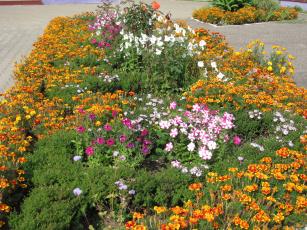 Картинка цветы разные вместе розы петунии бархатцы