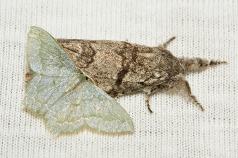 Картинка животные бабочки +мотыльки +моли полотно вязанное разные мотыльки насекомое макро itchydogimages