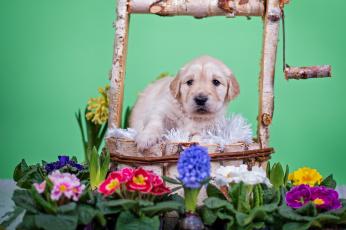 Картинка животные собаки собака животное цветы щенок колодец