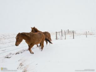 Картинка животные лошади снег забор