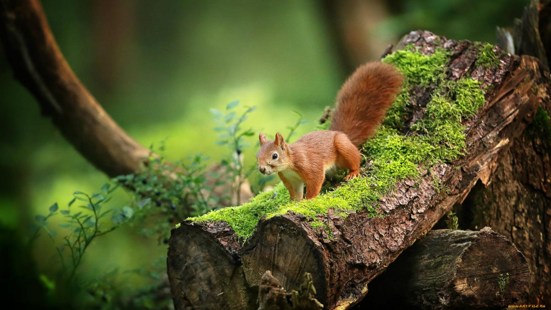 Животных в лесу картинки