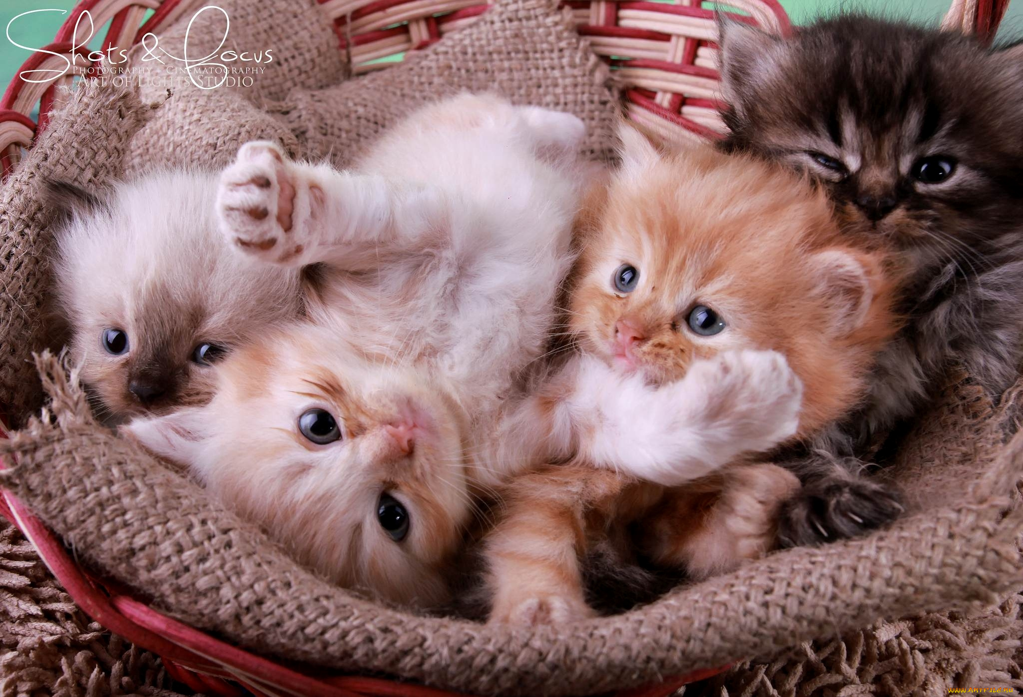 него характерно картинки котят красивого формата характеристик