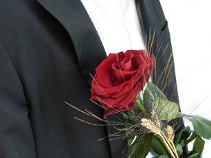 Картинка цветы розы красный
