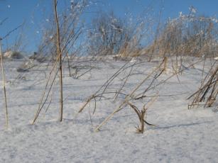 Картинка природа зима снег трава поле