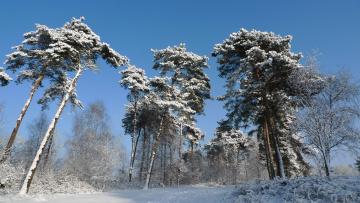 Картинка природа зима деревья снег