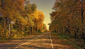 Картинка природа дороги лес шоссе осень