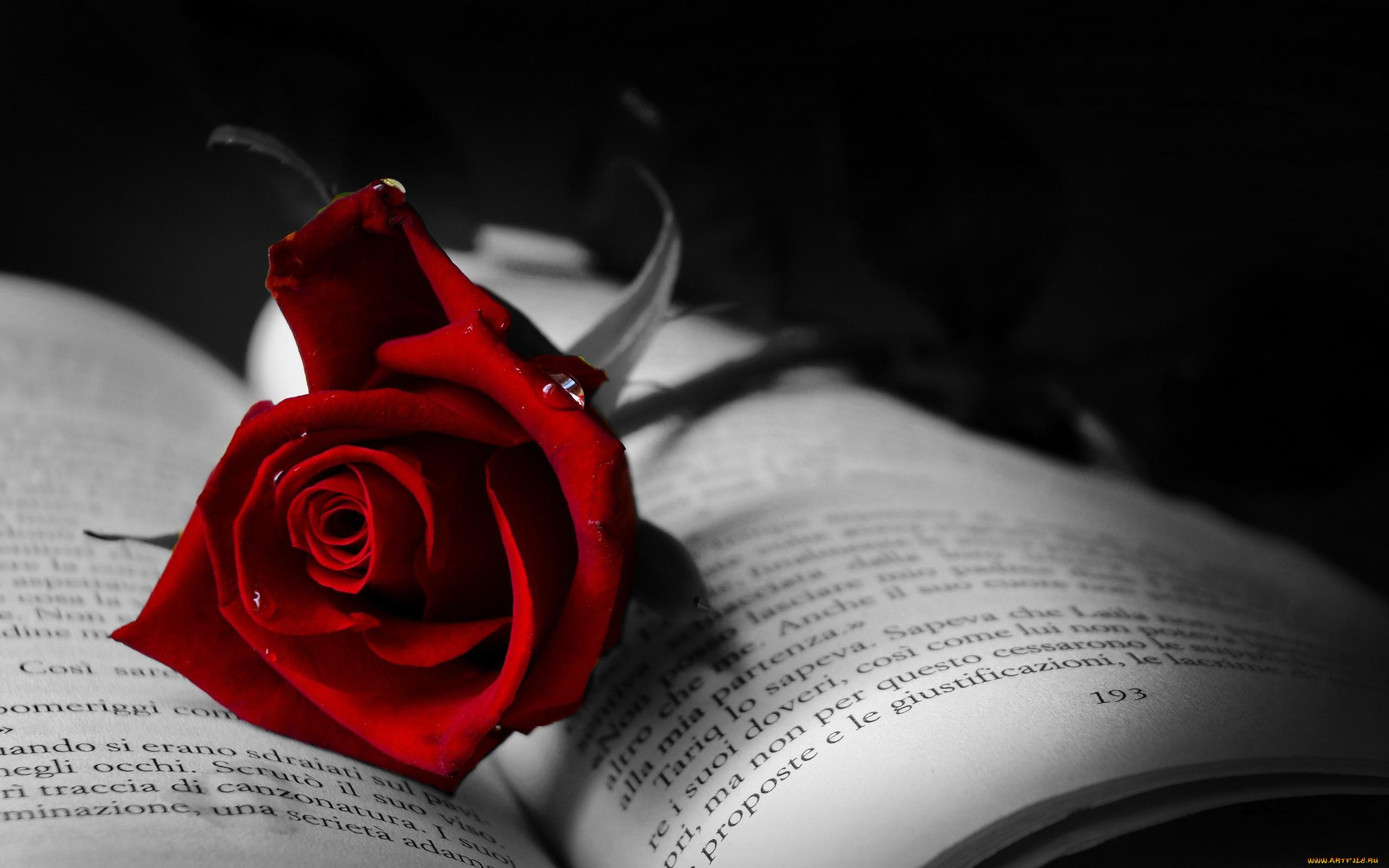 любовь цветок роза книга загрузить