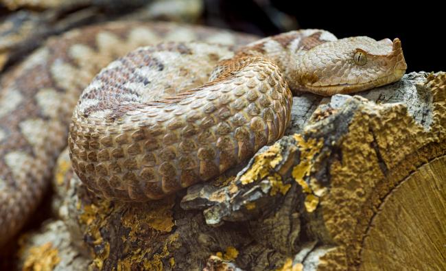 торт змея кобра фото