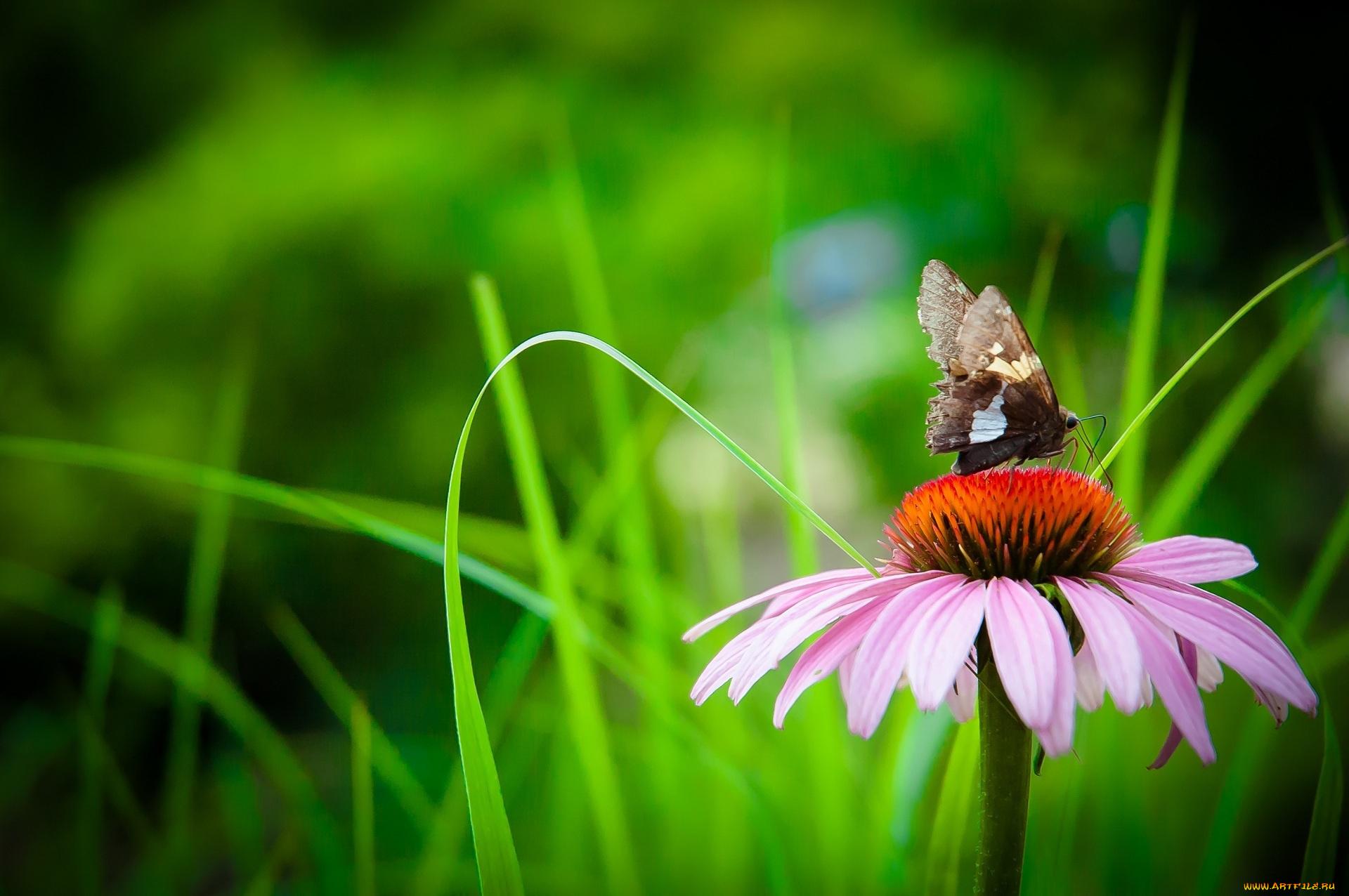 бабочка на зеленой траве  № 1396202 бесплатно