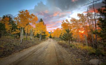 Картинка природа дороги осень деревья