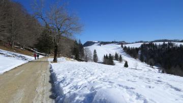 Картинка природа дороги снег деревья дорога