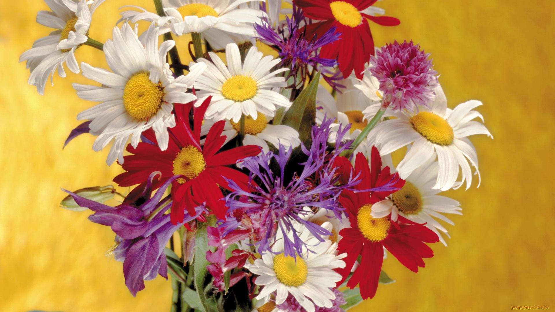 Красивая картинка с полевыми цветами