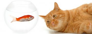 Картинка животные разные+вместе кот рыжий аквариум рыбка белый фон