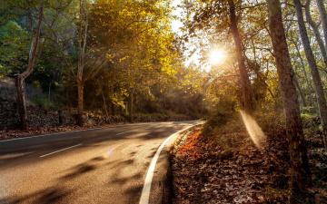 обоя природа, дороги, деревья, пейзаж, осень, дорога