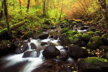 Картинка природа реки озера речка лес деревья осень камни