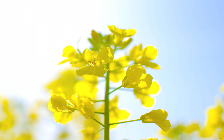 Весенние желтые полевые цветы названия и фото