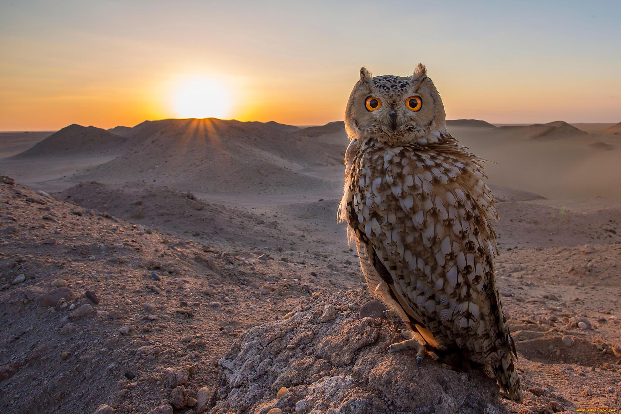 природа животные пустыня  № 3146277 без смс
