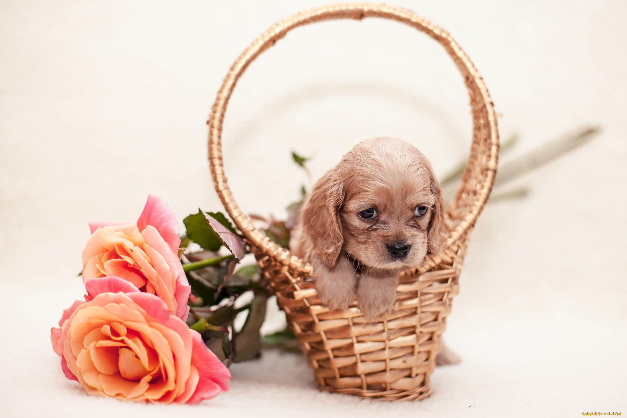 щенок корзина puppy basket скачать