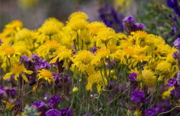 Картинка цветы луговые+ полевые +цветы лиловый желтый