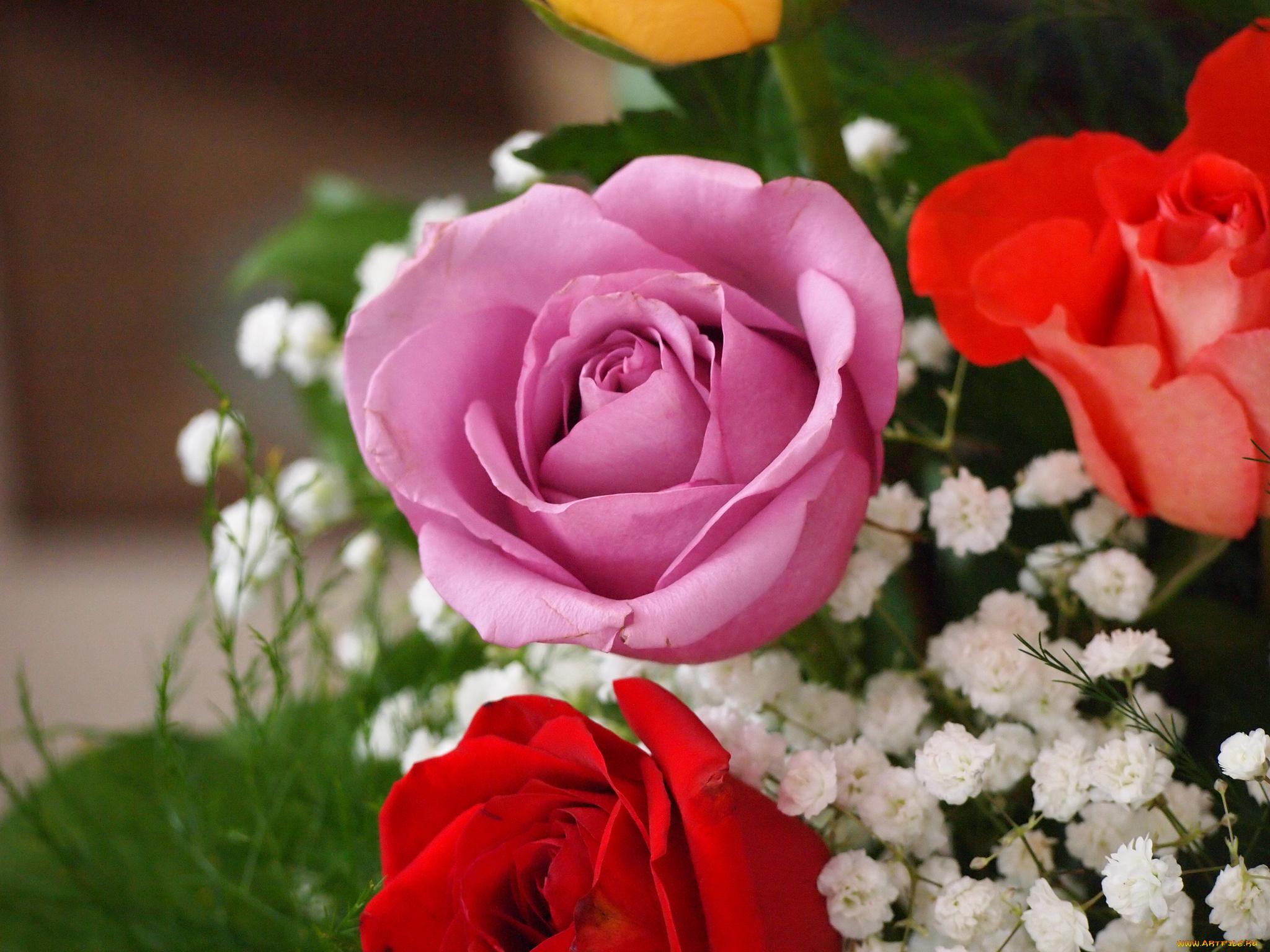 розы,желтые,букет,гипсофила,бутоны  № 761795 бесплатно