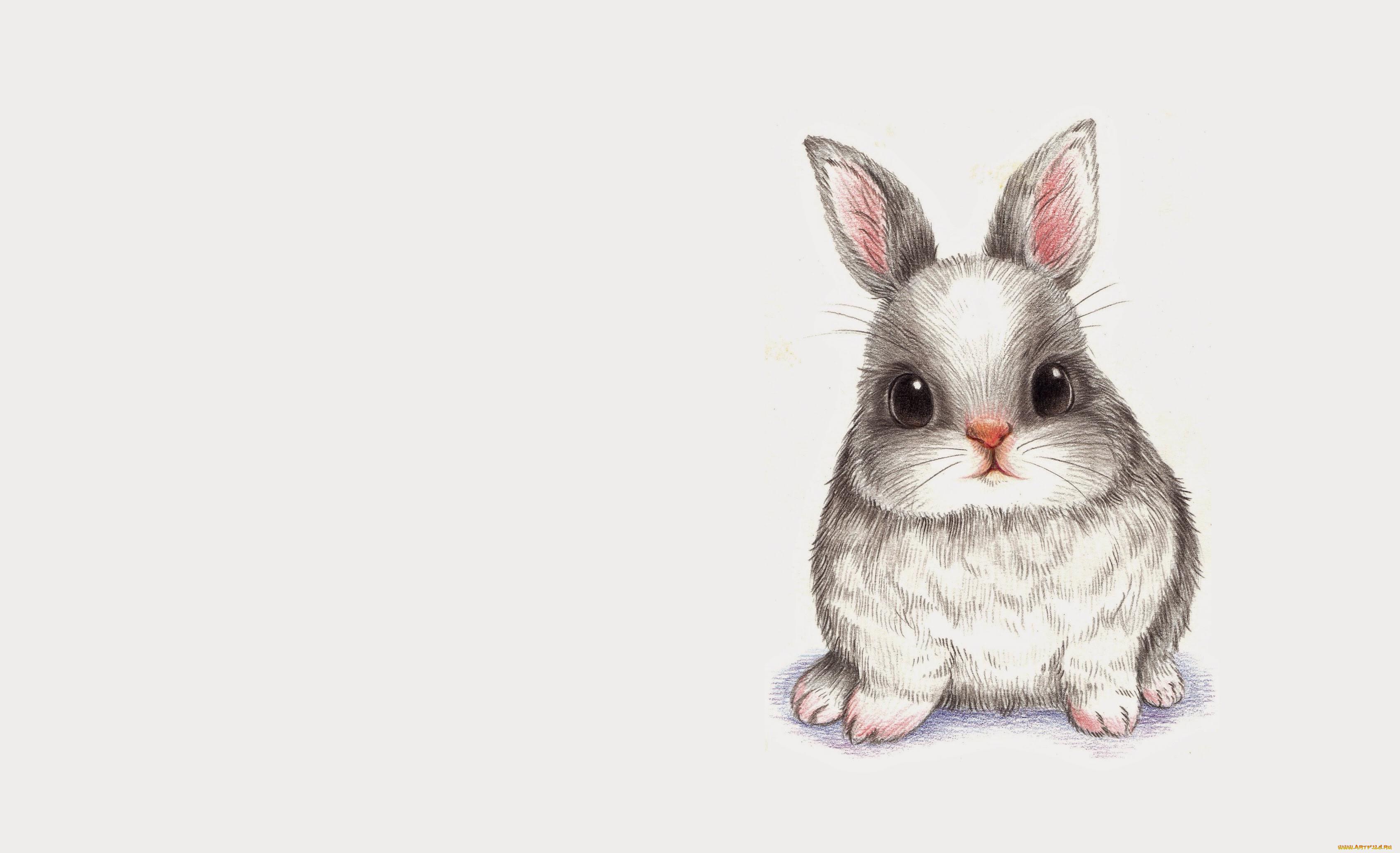 Рисунок с кроликом