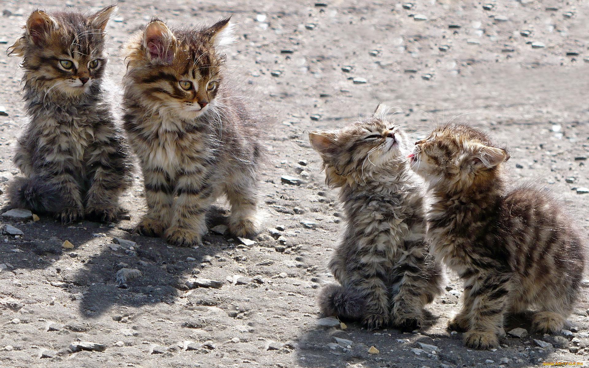 Юбилеем, смотреть картинки прикольных котят