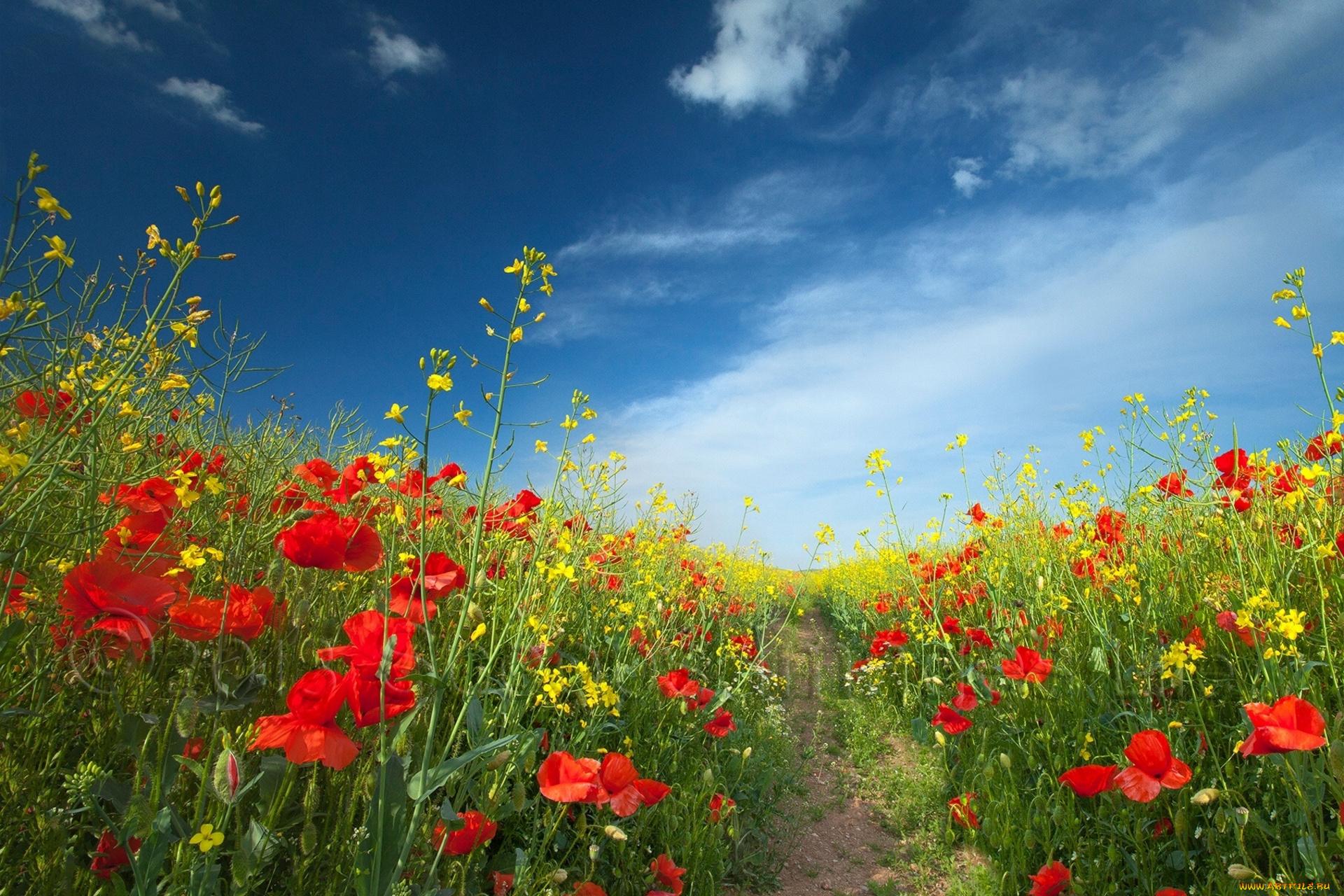 закат небо поляна цветы  № 3229901  скачать