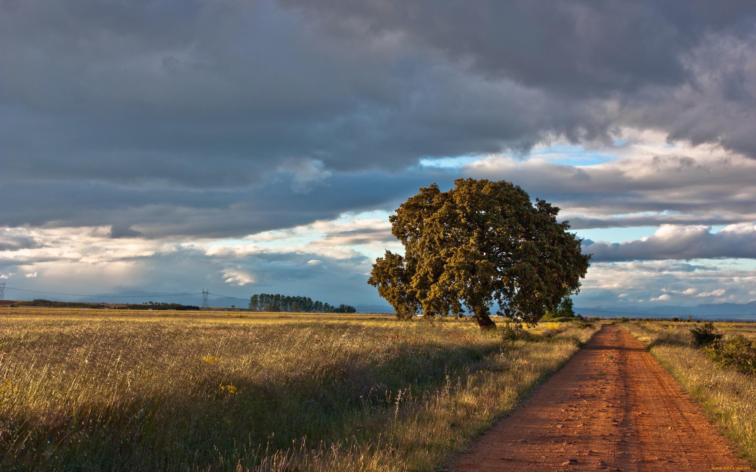 дерево дорога tree road  № 2404802 загрузить