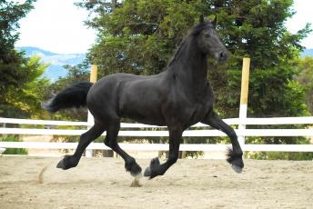 Картинка животные лошади конь