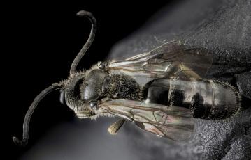 Картинка животные насекомые макросъемка насекомое