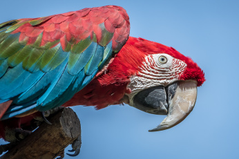 Картинка животные попугаи окрас попугай перья клюв
