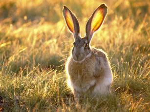 Картинка животные кролики зайцы