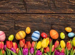 обоя праздничные, пасха, яйцо, тюльпаны