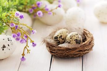обоя праздничные, пасха, яйцо, цветы, гнездо