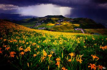 Картинка природа пейзажи луг цветы пейзаж поля