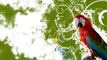 Картинка животные попугаи попугай