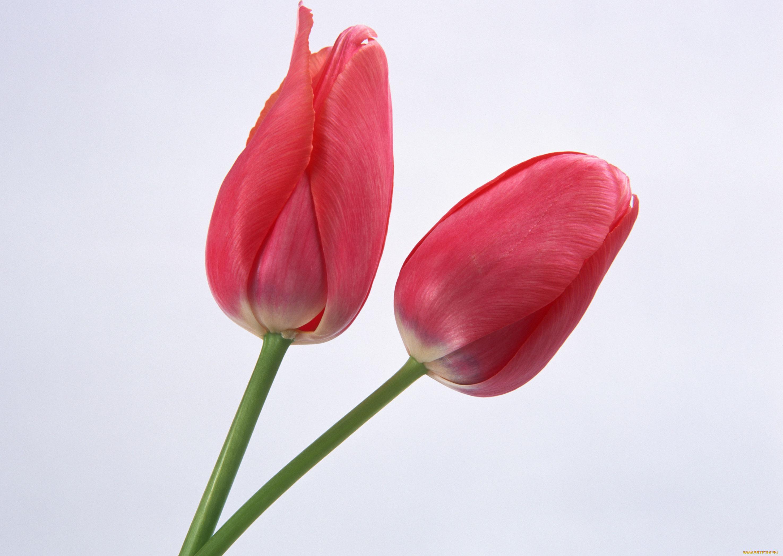 Эльзы прикольные, два цветка открытки